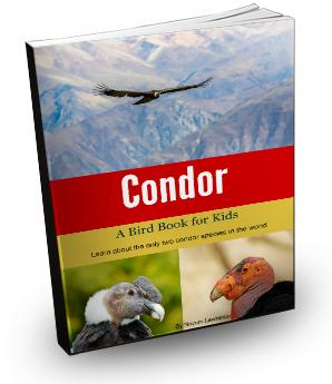 condor_cover3d