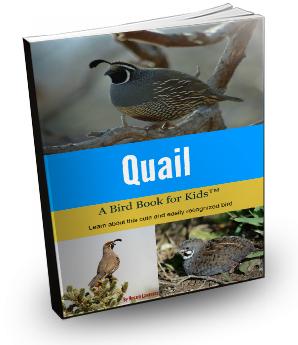 quail3d
