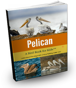 pelicancover3d