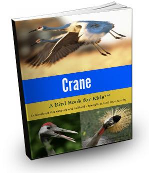 cranecover3d